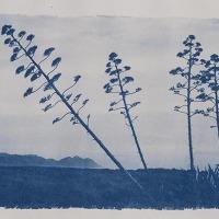 08-Cyanotype-Pitas
