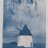 15-Cyanotype-Arbusto