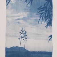 17-Cyanotype-Sierra-gata