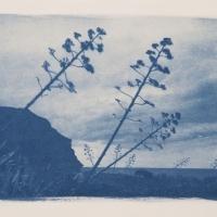 21-Cyanotype-Lasnegras