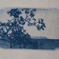 24-Cyanotype-Sierragata
