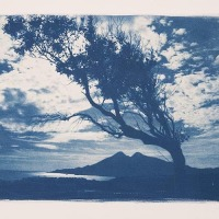 26-Cyanotype-Reflejo