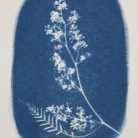 27-Cyanotype-Pimentero