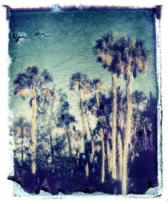 Polaroid image transfer Palms