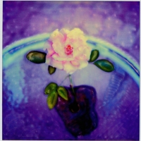 Polaroid SX-70 Rose
