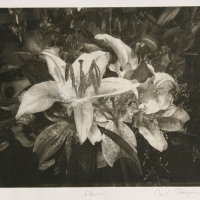 Intaglio print Flowers