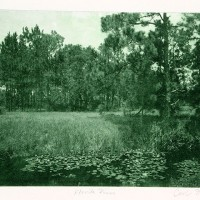 Photo-Intaglio-Florida-Pines