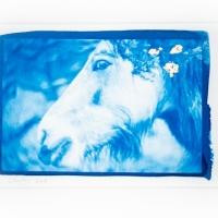 Cyanotype Dartmoor Pony II