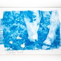 Cyanotype Dartmoor Pony III