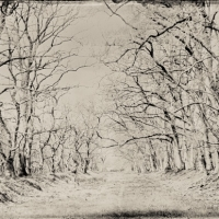 Wetplate collodion colonnade