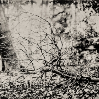 Wetplate collodion reaching out II
