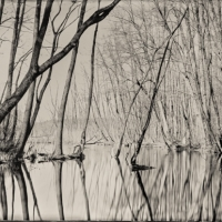 Wetplate collodion silence