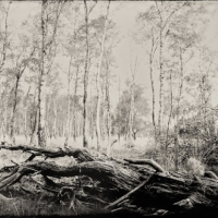 Wetplate collodion transformation