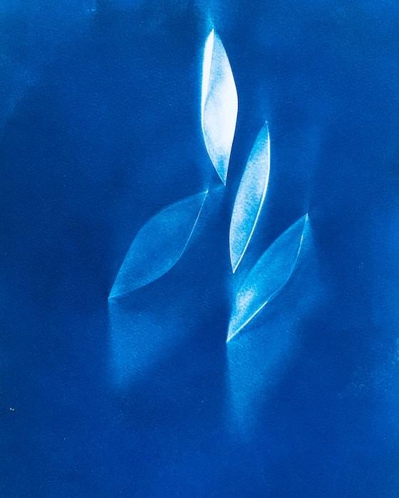 Cyanotype-Forward
