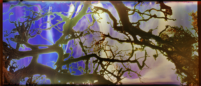Film acceleration Pt. Lobos pinhole