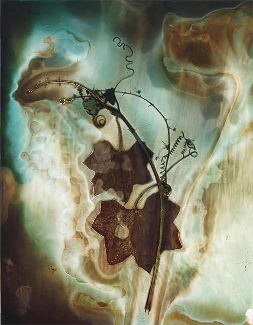 Lumen print Wild Cucumber Vine 1 on litho film with mask