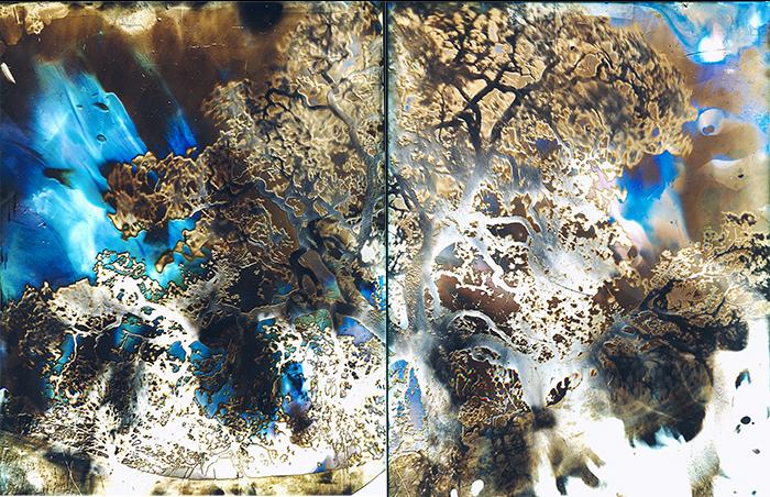 Solarized Mt Diablo Oak pinhole 2