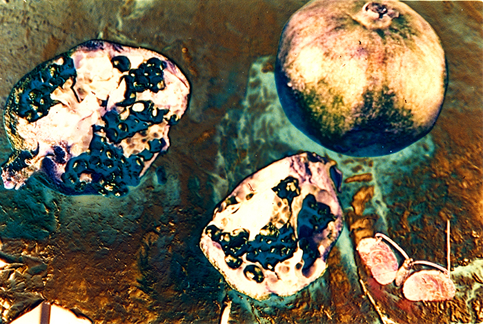 Solarized pomegranate and pin lens pix