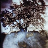 Solarized Mt Diablo Oak pinhole 1