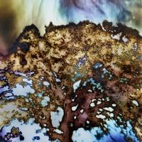 Solarized Mt Diablo Oak pinhole 4