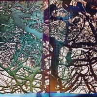 Solarized SFPanhandle tree pinhole