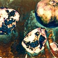 Solarized pomegranate and pin lens pix