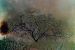 Film acceleration Central Valley Oak pinhole