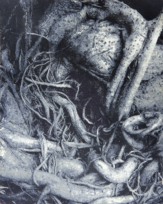 Gumoil Coiled Roots