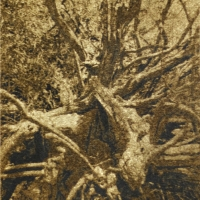 Gumoil Orange Roots