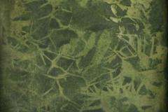 Gumoil Myrtillocactus