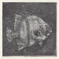 Photopolymer Gravure Angel Fish