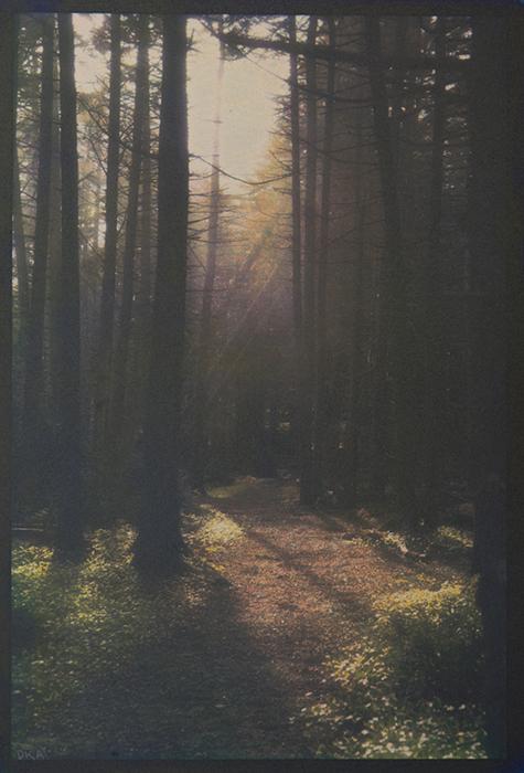 Monhegan Spruce