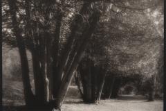 Tree Clusters, Saratoga Spa Park