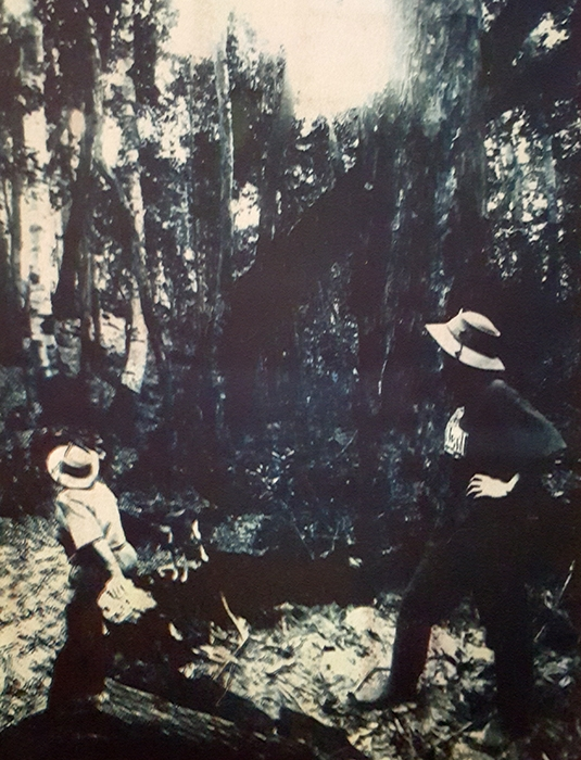 Gum bichromate Mangrove Mountain Ladies