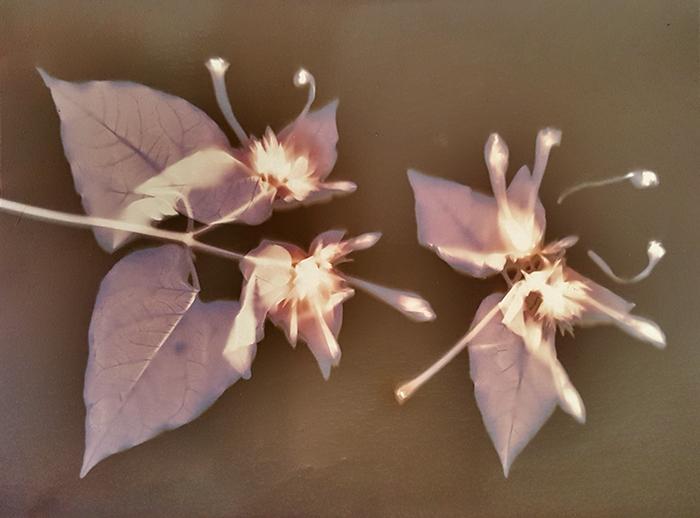 Lumen Floral Arrangement