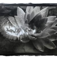 Double Exposure Flowers