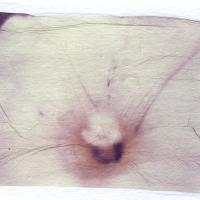 Polaroid emulsion lift Dads Flowers 3