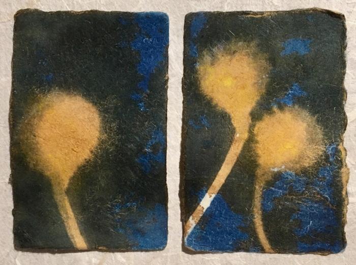 Cyanotype-Burr