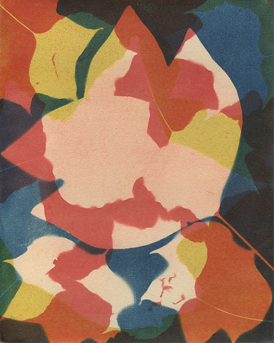 Cyanotype-Gum-Bichromate-Tuliptree-2