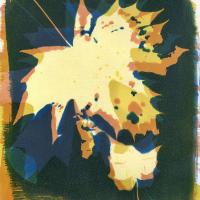 1_Cyanotype-Gum-Bichromate-Lasting-Impressions