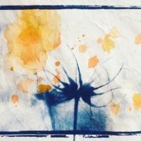 Cyanotype-Seed-Pod