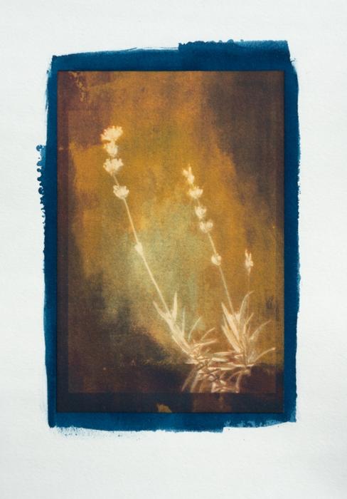 Cyanotype-Pigment-Annas-Garden-1