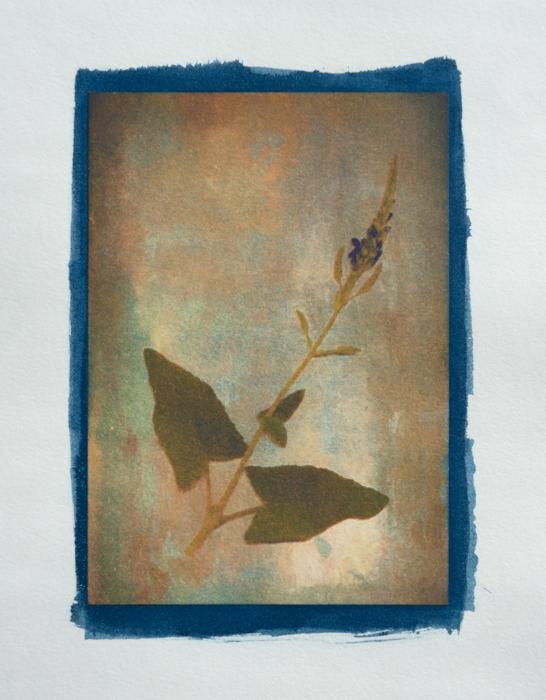 Cyanotype-Pigment-Annas-Garden-2