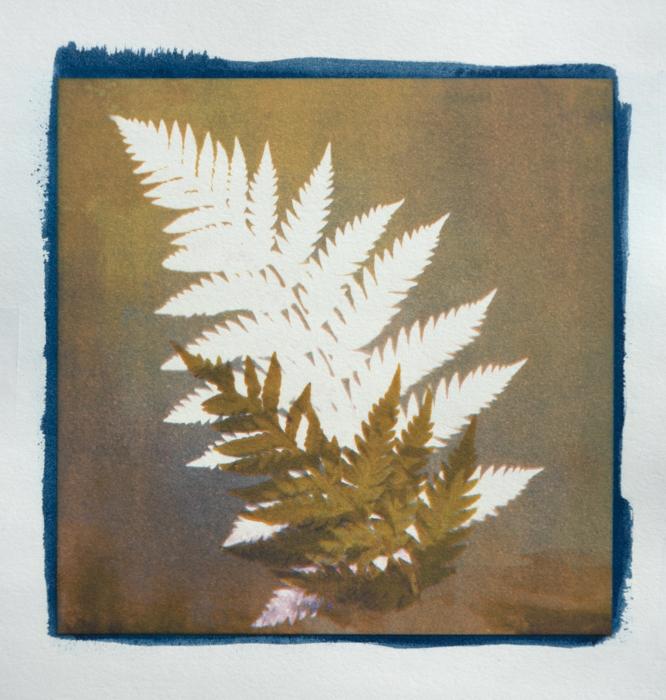 Cyanotype-Pigment-Annas-Gardern-3