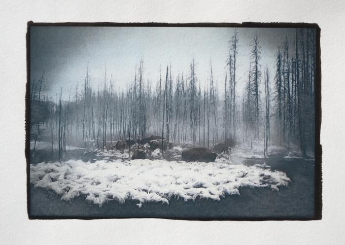 Cyanotype-over-Pt-Bison-in-the-Mist