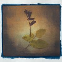 Cyanotype-Pigment-Annas-Garden-4