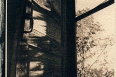 Cyanotype Untitled 6