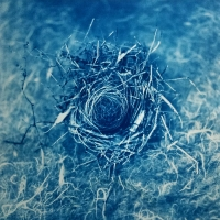 Gum over Cyanotype Nest