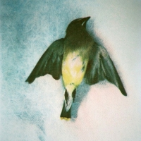 Tri Color Gum Bichromate Waxwing II