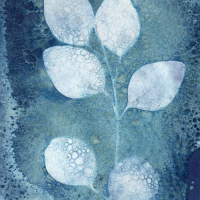 Wet-Cyanotype-Eucalyptus-2021